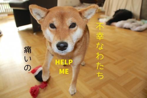 世界一不幸な犬の顔