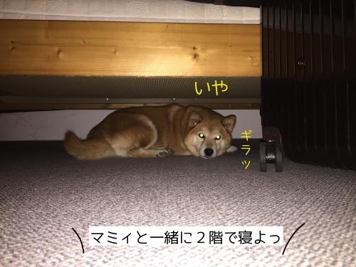 地下室ベッドの下