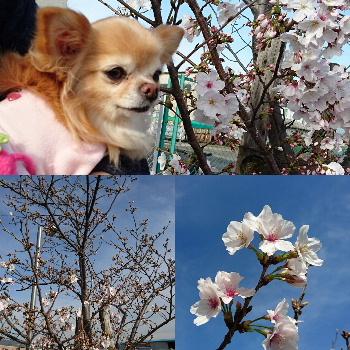 blog2016040503.jpg