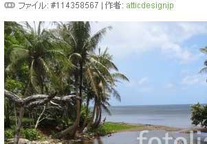 写真10:ヤシの木の合間の海