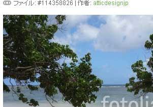 写真11:木陰から南国