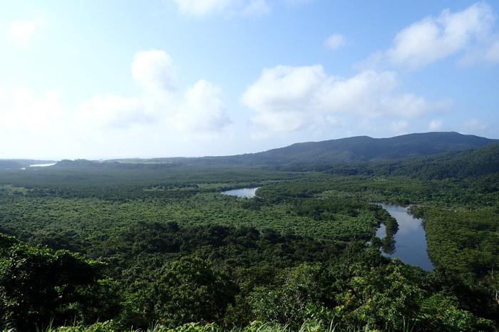 西表島仲間川
