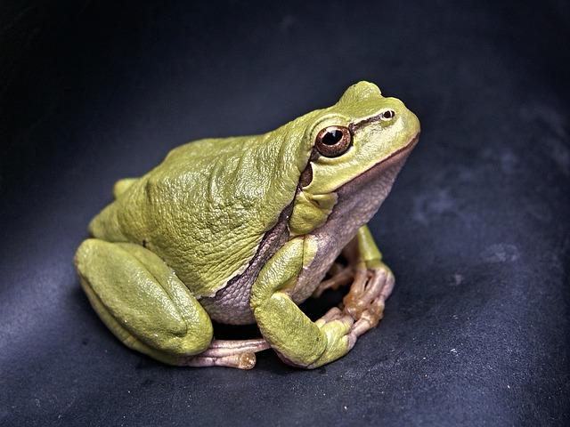 frog-111179_640.jpg