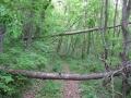 ご近所里山は倒木だらけ