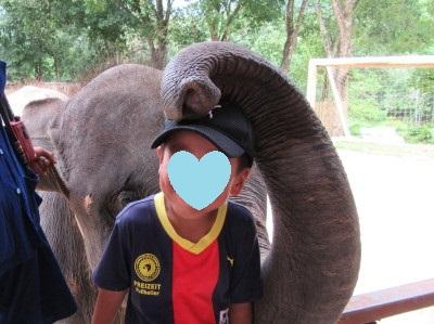 象とふれあい