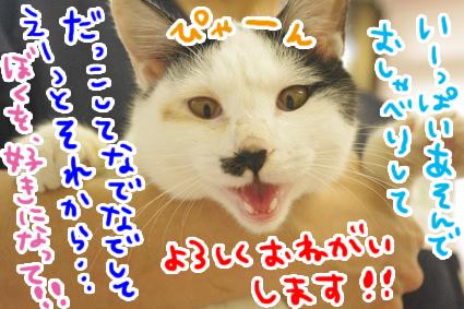 3093_201606090321257b2.jpg
