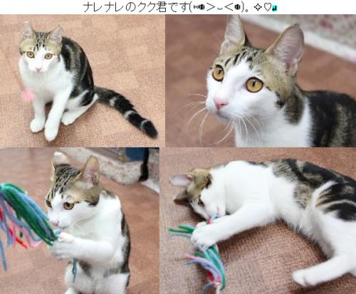 kukuosu_201609190652530a7.png