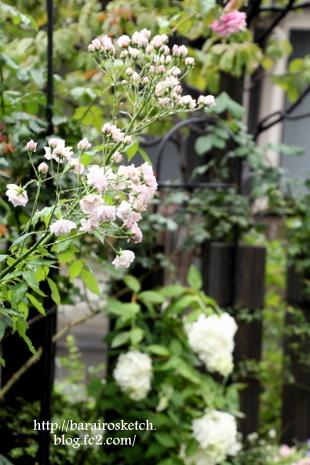 庭の様子7月14