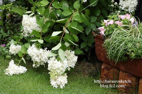 庭の様子7月16