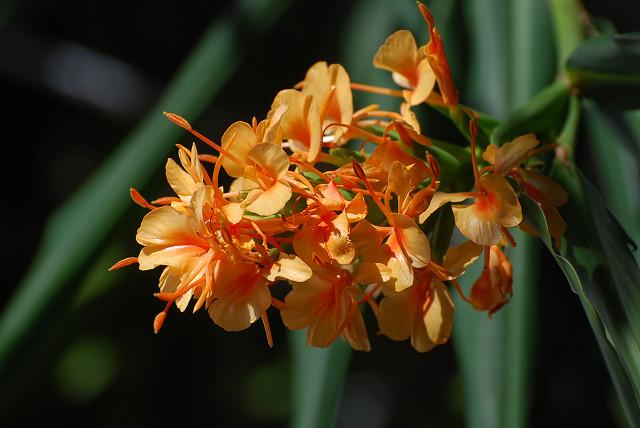 庭のデイジーの花