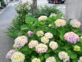 小さな花壇
