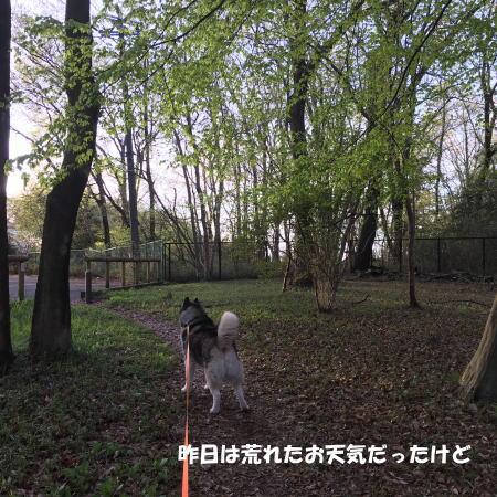 2016-04-08_2.jpg