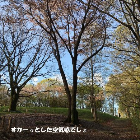 2016-04-08_3.jpg