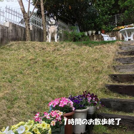 2016-04-12_7.jpg