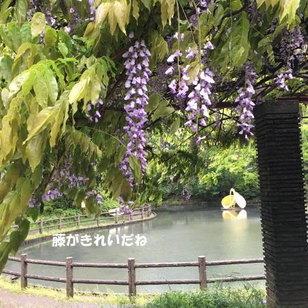 2016-05-09_9.jpg