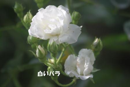 2016-05-16_8.jpg