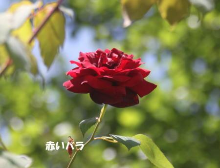 2016-05-16_9.jpg