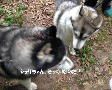 2016-05-27_4.jpg