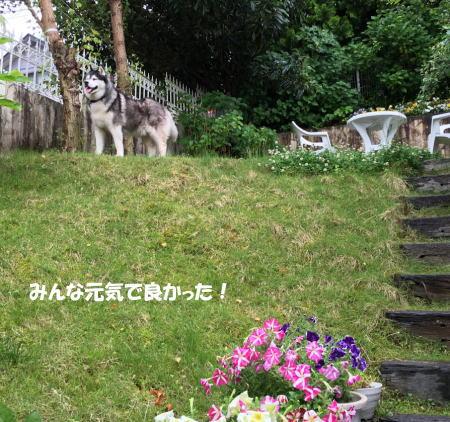 2016-05-27_6.jpg
