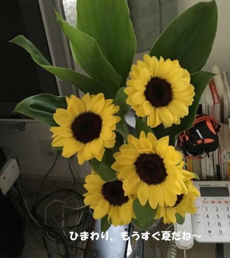 2016-06_17_11.jpg