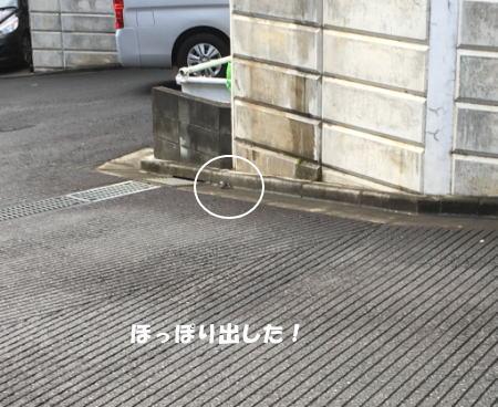 2016-06_17_6.jpg