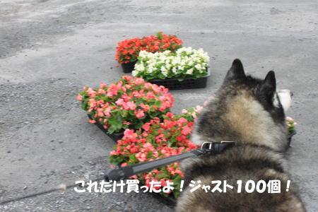 2016-06_20_9.jpg