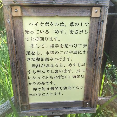 2016-06_21_6.jpg
