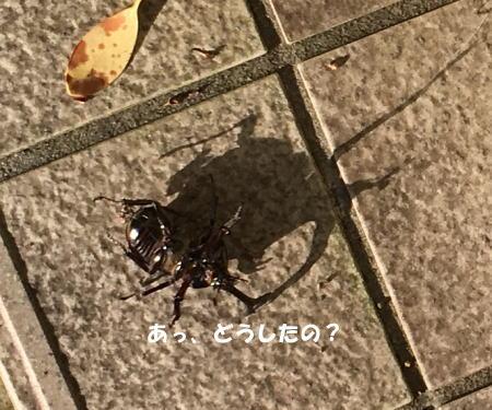 2016-06_27_5.jpg