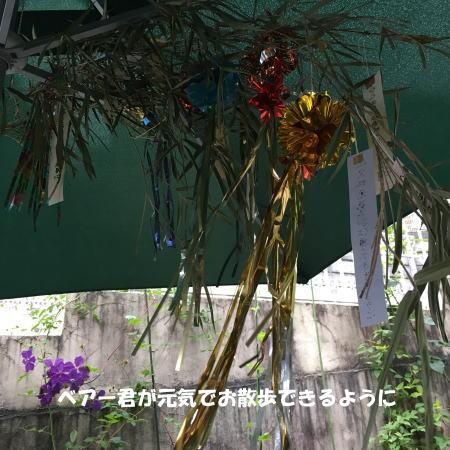 2016-07_05_4.jpg