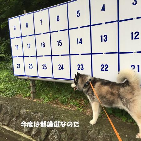 2016-07_14_1.jpg