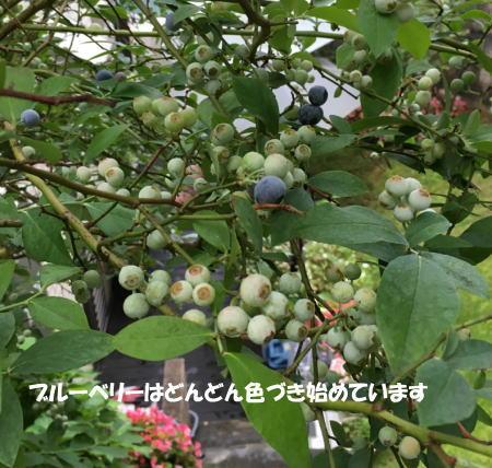2016-07_17_5.jpg