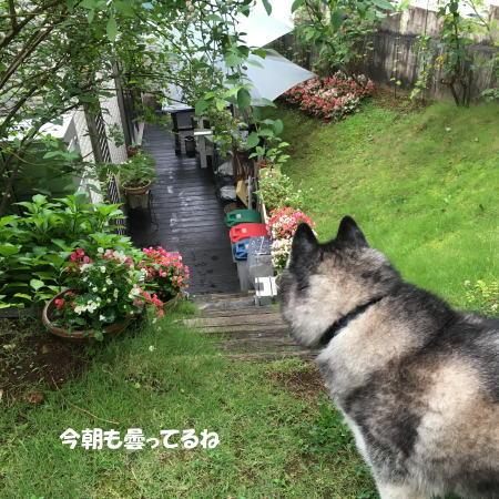 2016-07_17_8.jpg