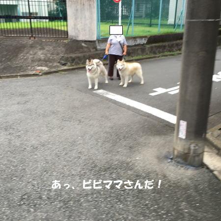 2016-07_31_1.jpg