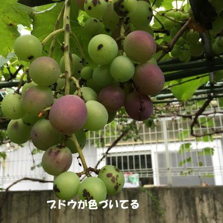 2016-07_31_5.jpg