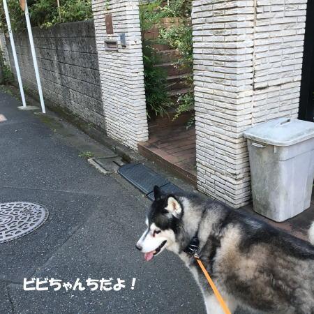 2016-09_01_3.jpg