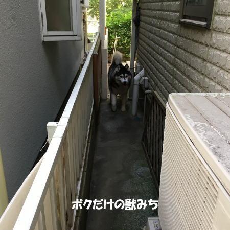 2016-09_06_2.jpg