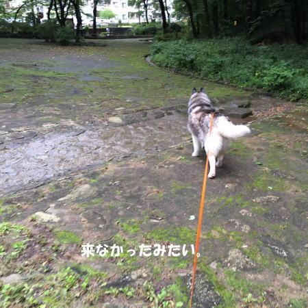 2016-09_21_8.jpg