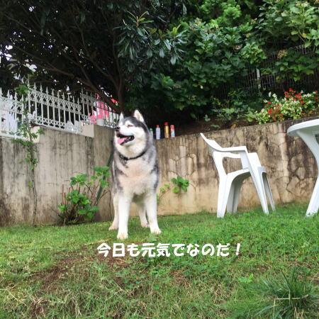 2016-09_26_6.jpg