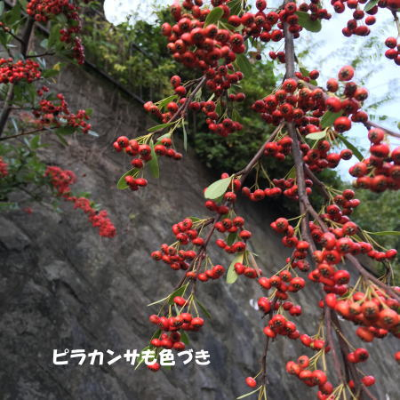 2016-10_12_2.jpg