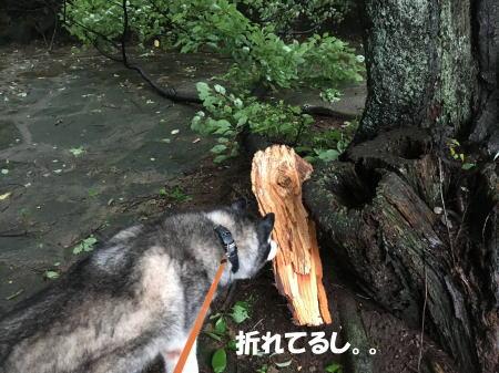 2016-08_23_4 - コピー
