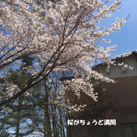 2016_0424_5.jpg