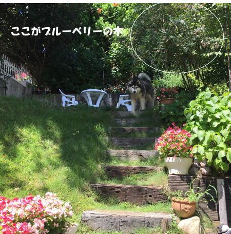 2016_0730_8.jpg