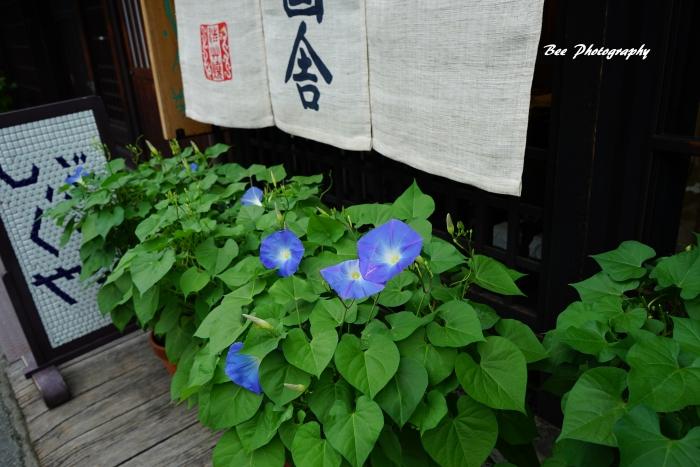 bee-飛騨高山0604
