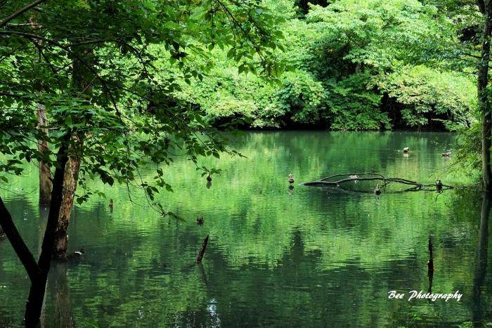 bee-長池公園1092