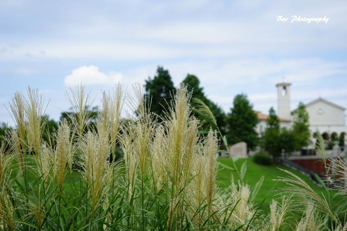 bee-長池公園1057
