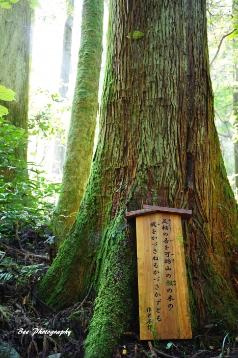 bee-高尾山いろはの森2055