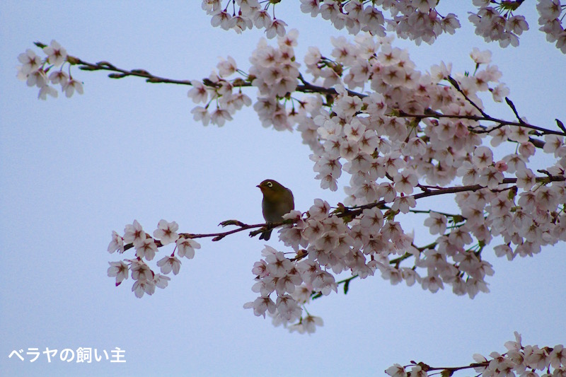 BNK_Mejiro_IMG_3126 2