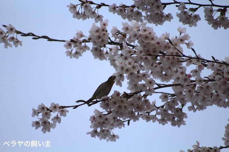 BNK_Mejiro_IMG_3125 2