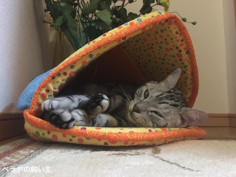 BNK_cat_IMG_1091 4