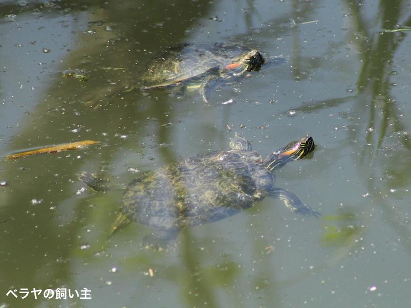 IMG_3995_BNK_Turtles.jpg